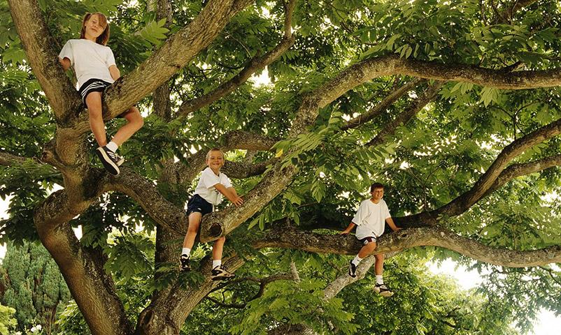 Children Sitting in Tree